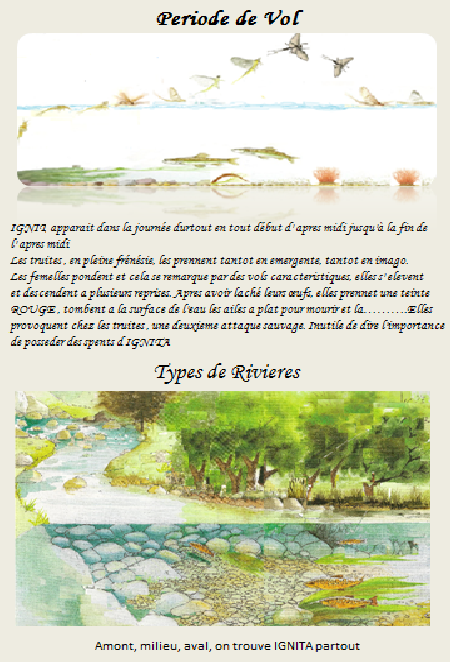 ephemerella ignita 2